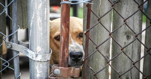 chien enfermé pension maltraitance