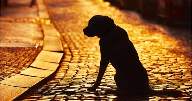 arnaque chien perdu