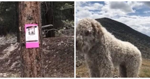 chien perdu montagnes