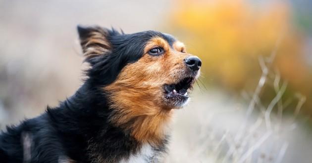 un chien apeuré