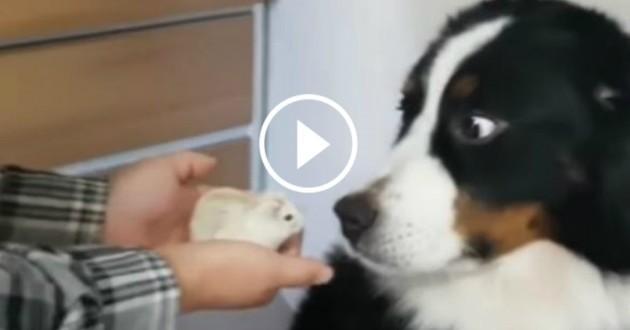 chien peur hamster