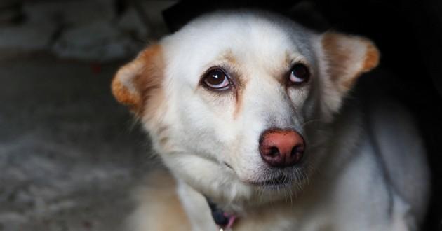 chien terrifié