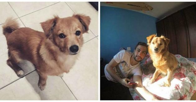 chien roux adoption
