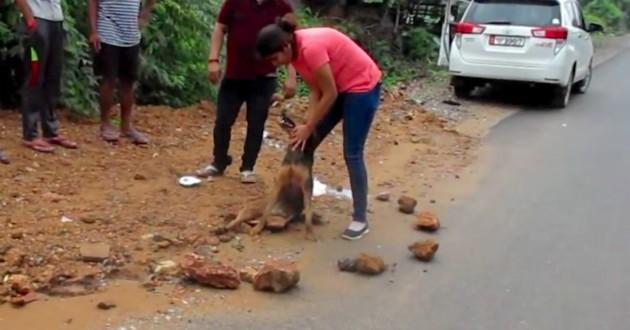chien entouré de pierres