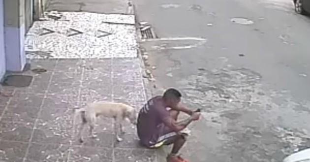 chien pipi rue