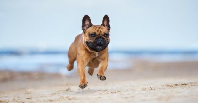 dressage chien vicq