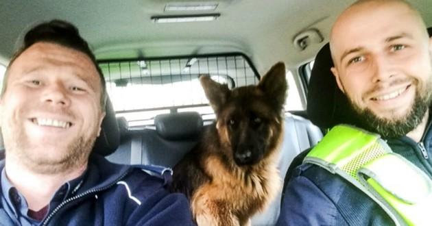 chien policier dans voiture