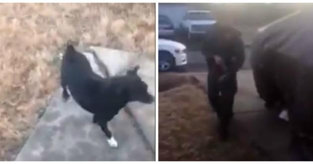 policier tire chien