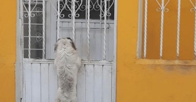 chien portail