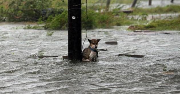 chien ouragan