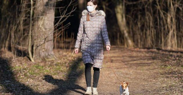 promenade de chien pendant l'épidémie Covid-19