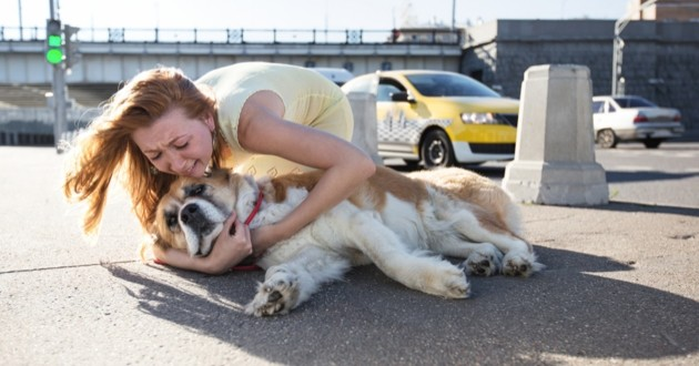 un chien qui a été battu sur la place publique