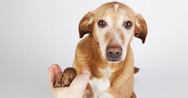 un chien qui tend la patte à un humain