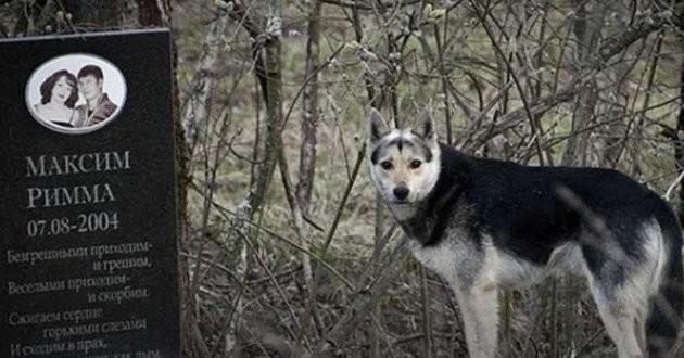 Un chien vit sur la tombe de ses maîtres