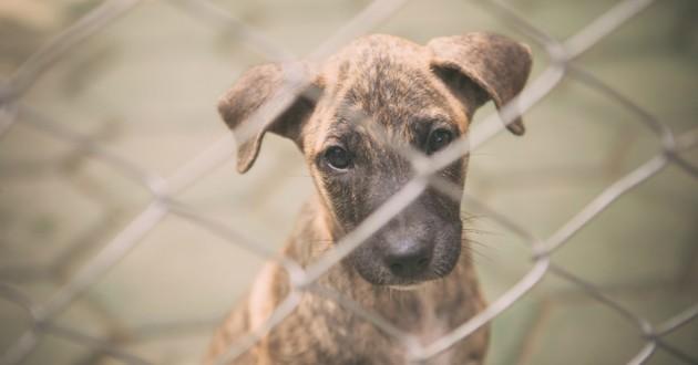 Adopter un animal dans un refuge