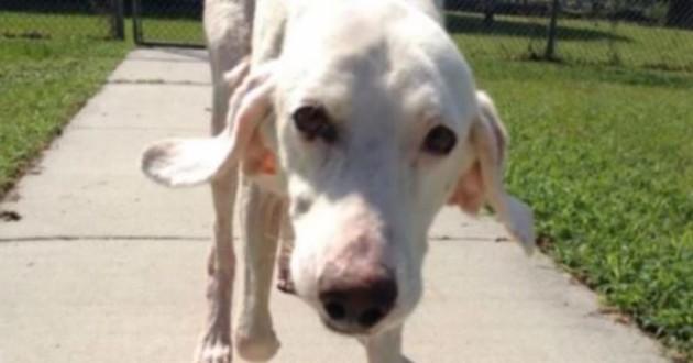 chien blanc refuge