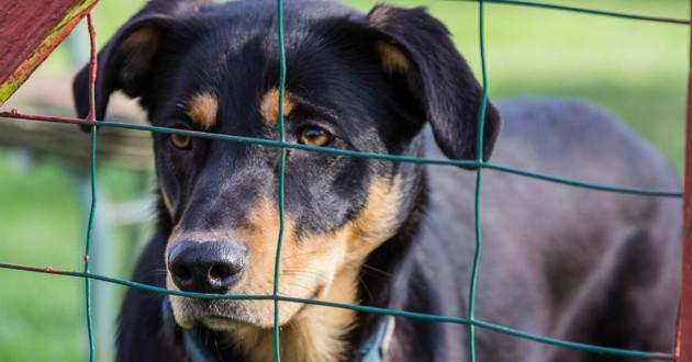chien refuge cage
