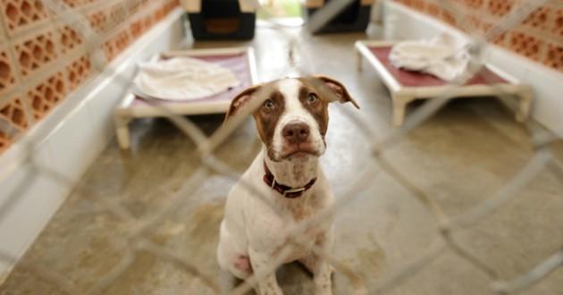 Comment Adopter Un Animal A La Spa Choisir Son Chien Wamiz