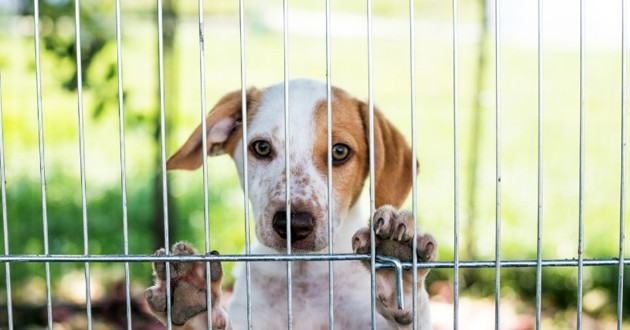 chien dans un refuge