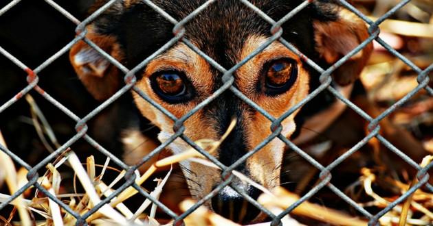 chiens refuge