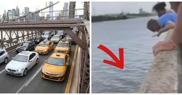 chien rivière pont