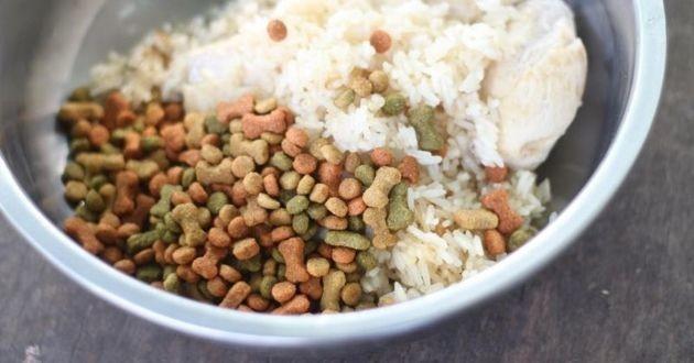 du riz dans une gamelle pour chien