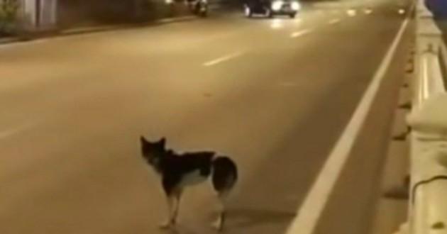chien dans la rue