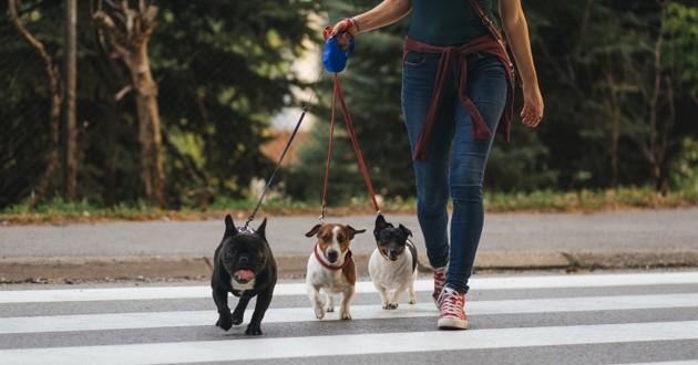 chiens qui traversent la rue