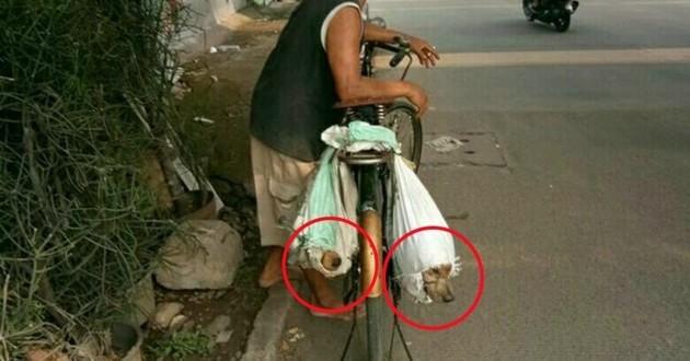 chiens sacs