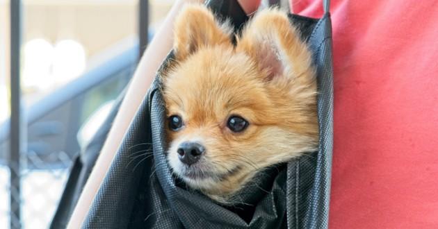 chien dans un sac dans le bus