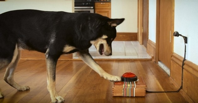 Astucieux : une machine pour ne plus jamais rater vos photos avec votre chien