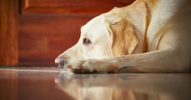 chien seul triste