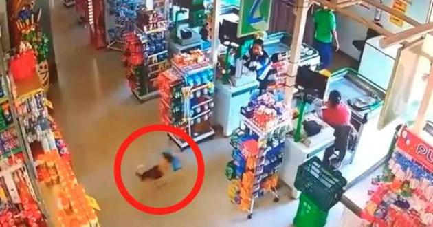 chien supermarché voleur