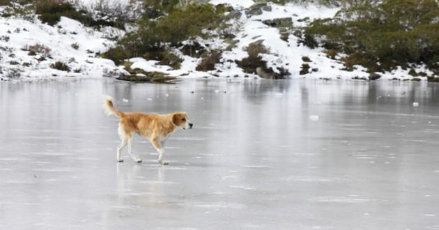 chien sur un lac