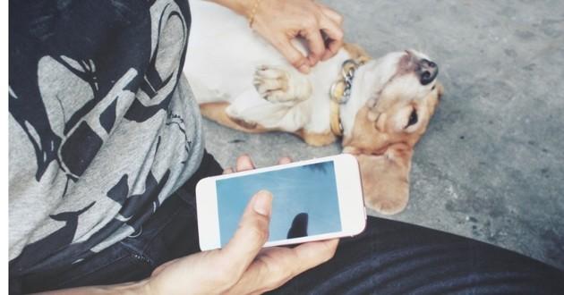 téléphone chien