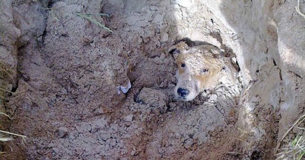 chien enterré