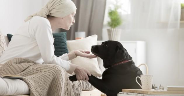 chien thérapeuthe