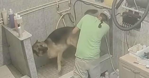 chien maltraité toiletteur
