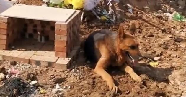 chien sur une tombe