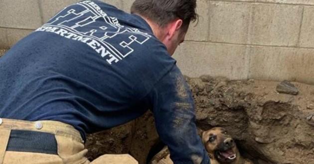 chien coincé dans un trou secouru par un pompier