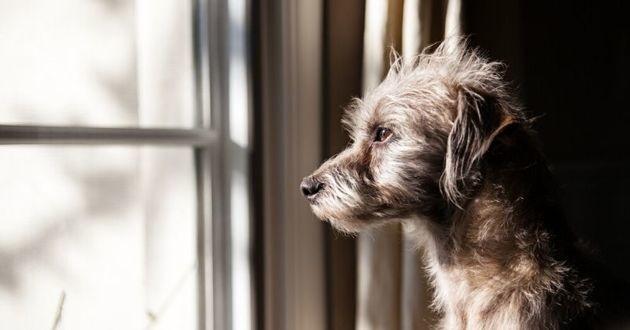 chien triste seul à la fenêtre