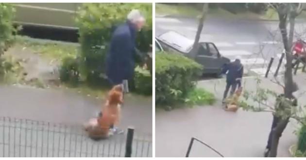 chien trainé rue