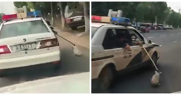 chien voiture police