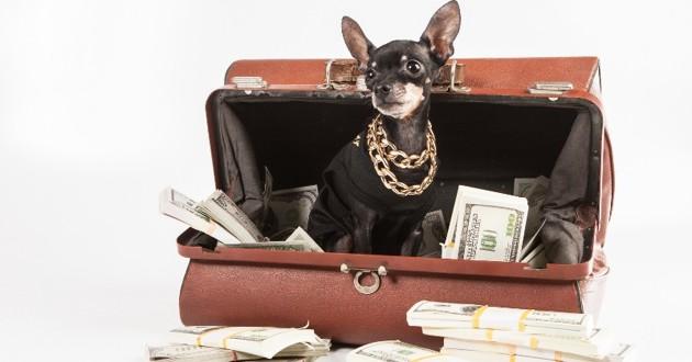 un petit chien dans un sac de billets
