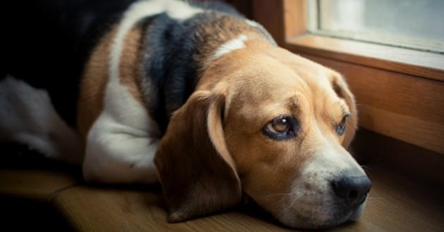 chien triste deuil