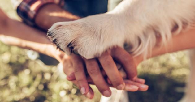 chien union patte mains