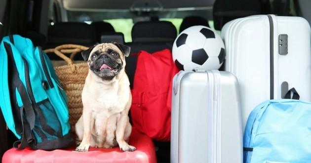 chien valise vacances