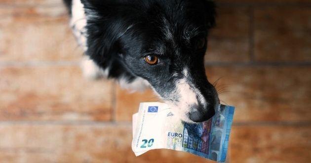 chien vendu