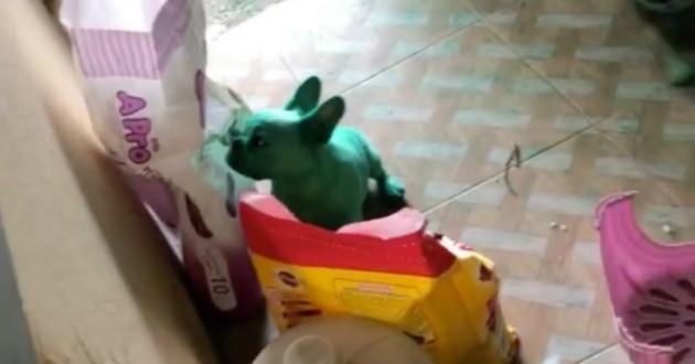 chien vert cuisine