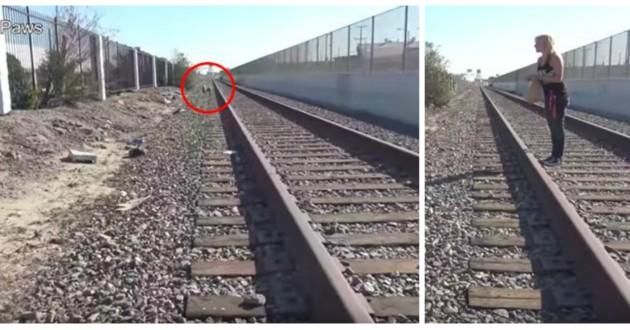 chienne rails chemin fer